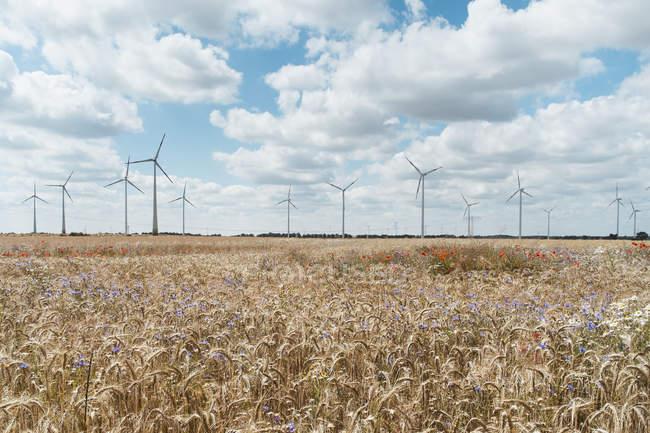 Cultivos que crescem na fazenda contra turbinas eólicas — Fotografia de Stock