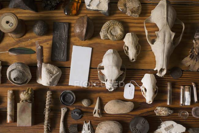 Крупный план коллекции древних останков на деревянном столе — стоковое фото