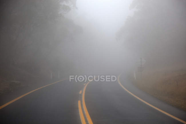 View to misty road in deep forest — Stock Photo