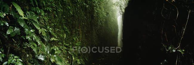 Panoramablick auf schmalen Fußweg im dunklen Wald — Stockfoto