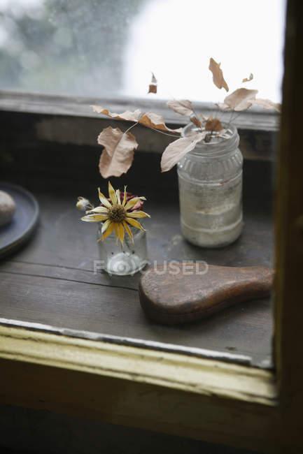 Vista de cerca de flor seca y hojas en frascos en el alféizar de la ventana - foto de stock
