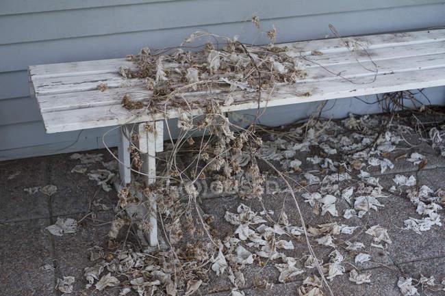 Hojas secas y ramas en Banco - foto de stock