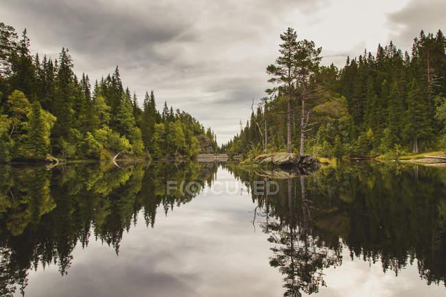 Idílica vista a los árboles que se reflejan en la superficie del lago tranquilo - foto de stock