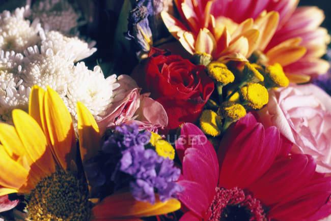 Полная рамка цветущего букета — стоковое фото