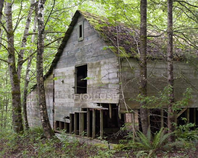 Руїни дерев'яного будинку в лісі — стокове фото