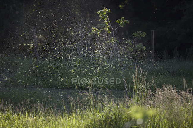 Sunlit grass cuts spraying over lawn — Stock Photo