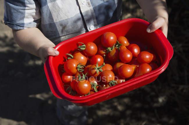 Обтинання хлопчик тримає в руках балансова кошики повні свіжі помідори — стокове фото