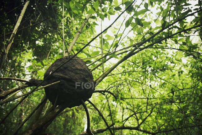 wasp nest in trees