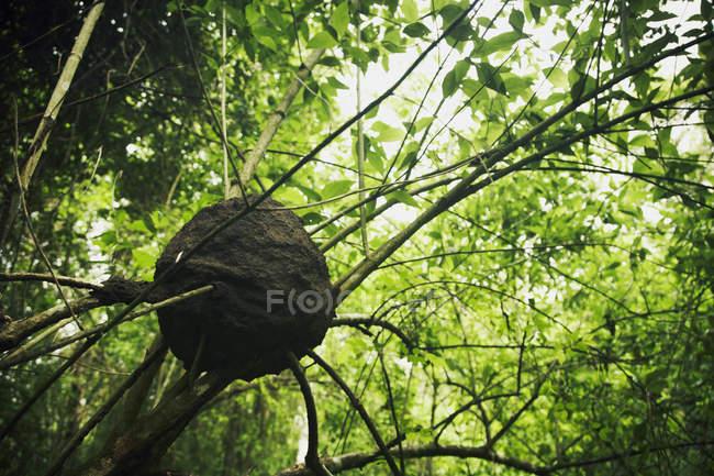 Vista inferior de la jerarquía de la avispa en árbol en el bosque - foto de stock