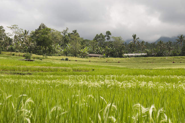 Scenic view of rice terrace against cloudy sky — Stock Photo