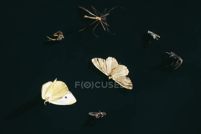 Семь различных насекомых на черном фоне — стоковое фото