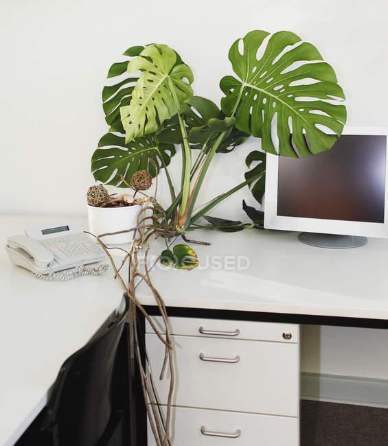 Computer monitor da impianto in vaso e telefono sul tavolo — Foto stock