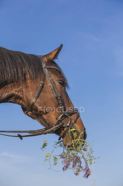 Vista de ângulo baixo de cavalo comendo grama contra o céu — Fotografia de Stock
