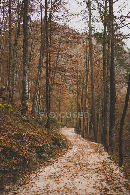 Idyllic footpath passing through autumn forest trees — Stock Photo