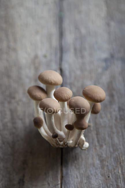 Nahaufnahme der braunen Shimeji Pilze auf Holz Tisch — Stockfoto
