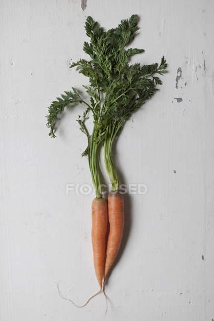 Directamente sobre la vista de dos zanahorias en mesa blanca - foto de stock