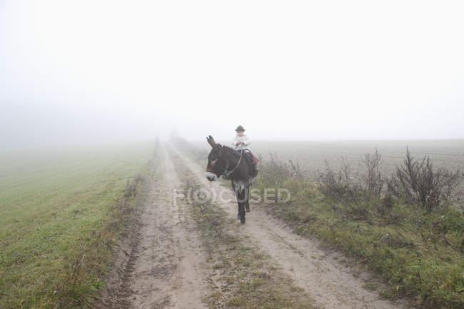Девушка верхом на осле по дороге посреди поля в туманную погоду — стоковое фото
