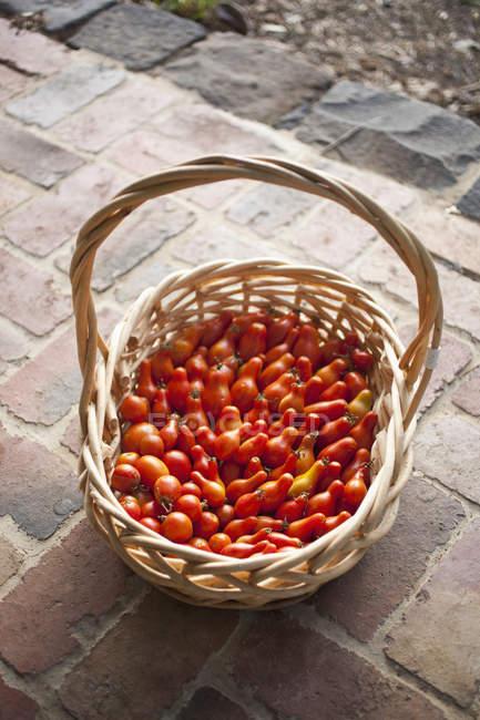 Cestino di vimini di pomodori appena raccolti sul portico di fronte — Foto stock