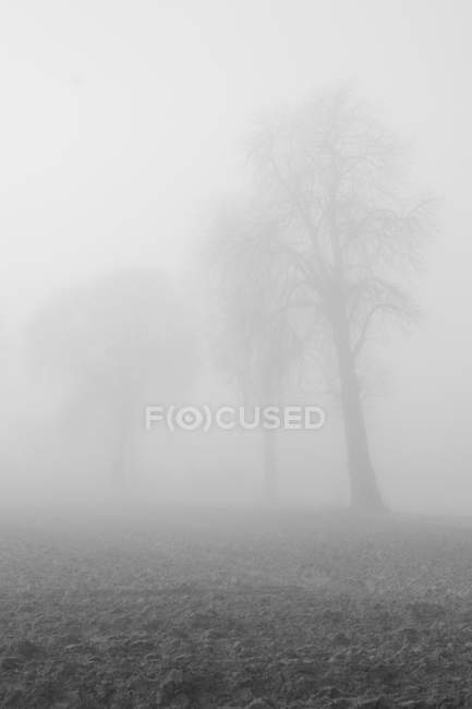 Misty silhouettes of trees in foggy weather — Stock Photo