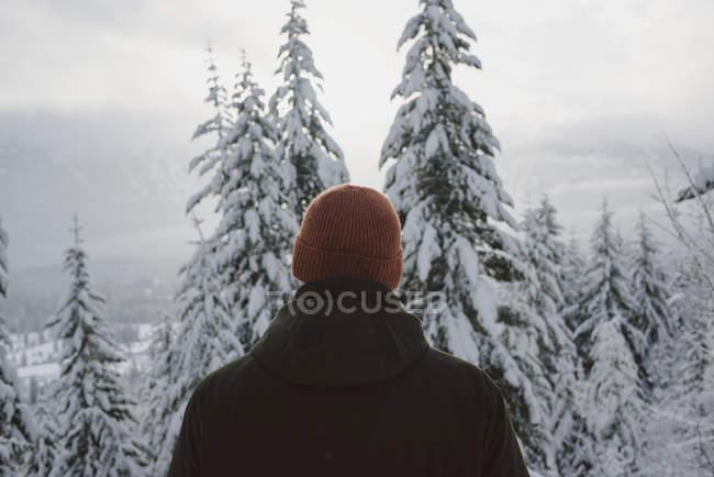 Вид сзади на человека, смотрящего на заснеженные деревья на зимних лугах — стоковое фото