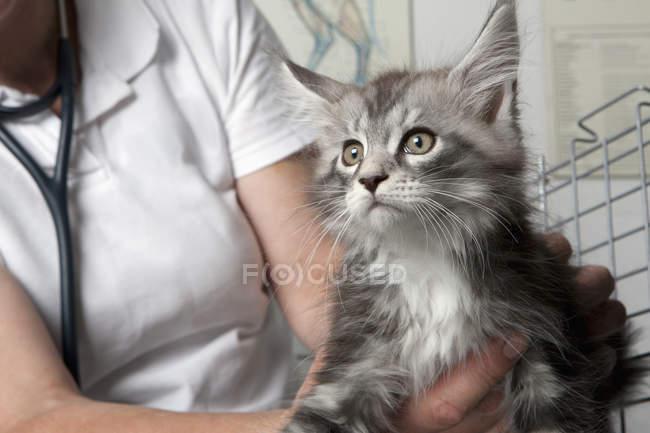 Sezione centrale del gatto veterinario in clinica — Foto stock
