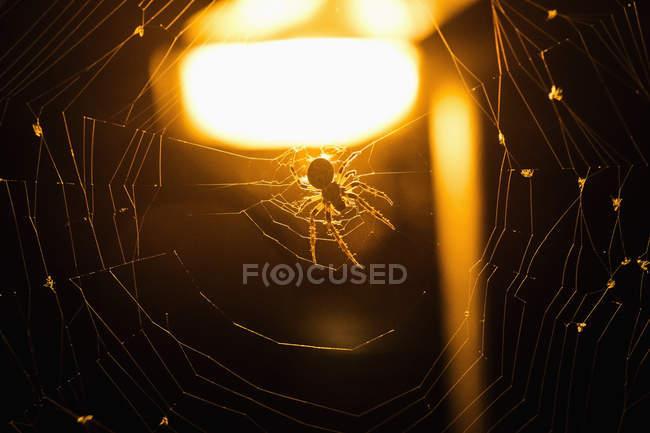 Nahaufnahme des Spider Web beleuchteten Hintergrund — Stockfoto