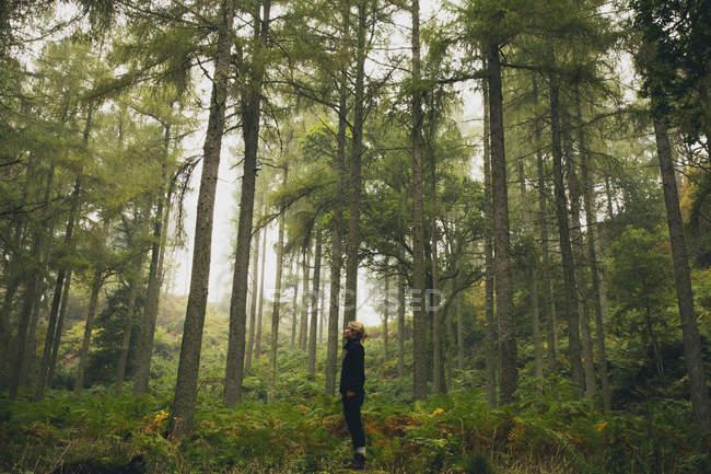 Вид збоку жінку, що стояли в лісі — стокове фото