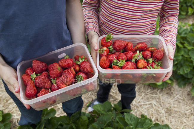 Midsection of kids holding plastic containers with freshly picked strawberries — Stock Photo