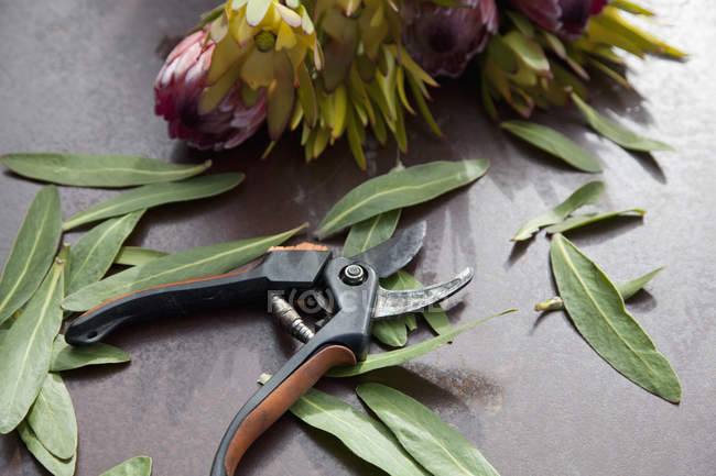 Close up view of secateurs and leaves on table — Stock Photo