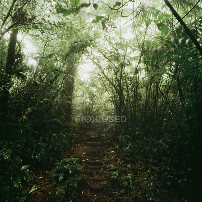 Idyllic view of footsteps in forest — Stock Photo