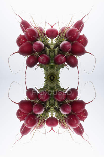 Composition of mirrored bunches of radishes on white — Stock Photo