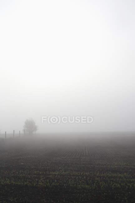 Paysage brumeux de terrain agricole en temps brumeux — Photo de stock