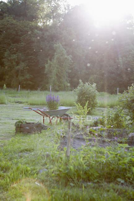Wheelbarrow with flower pots at garden on sunny day — Stock Photo