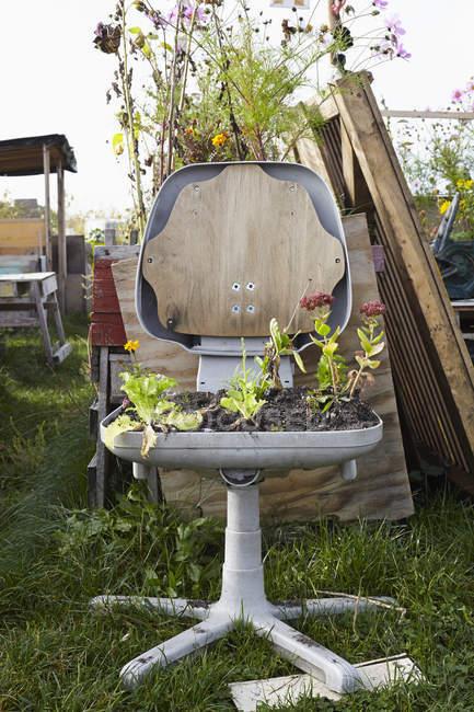 Pflanzen wachsen auf Stuhl im Garten — Stockfoto