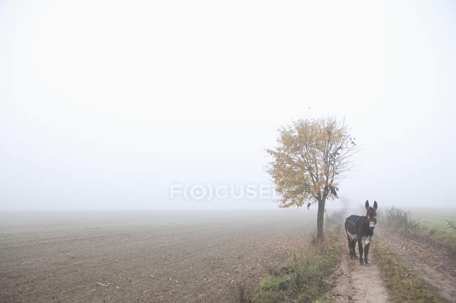 Donkey standing on road amidst foggy field — Stock Photo
