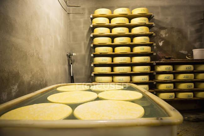 Interior da sala de fábrica de queijo — Fotografia de Stock
