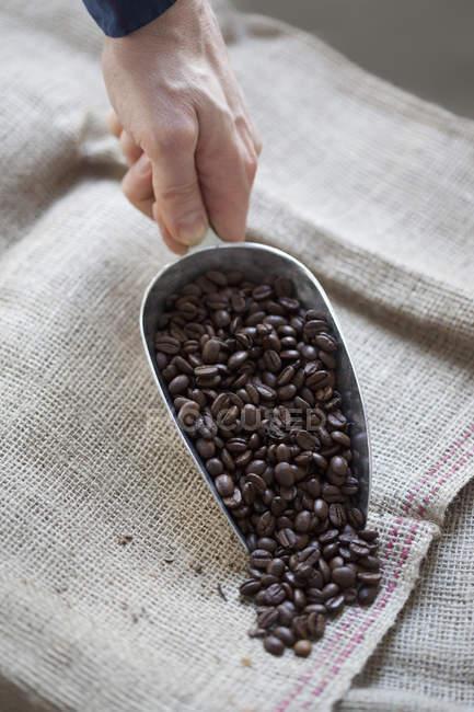 Mano de la cosecha con cucharada verter granos de café en el saco - foto de stock