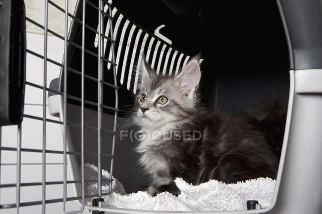Gatto guardando lontano mentre seduto in gabbia alla clinica veterinaria — Foto stock