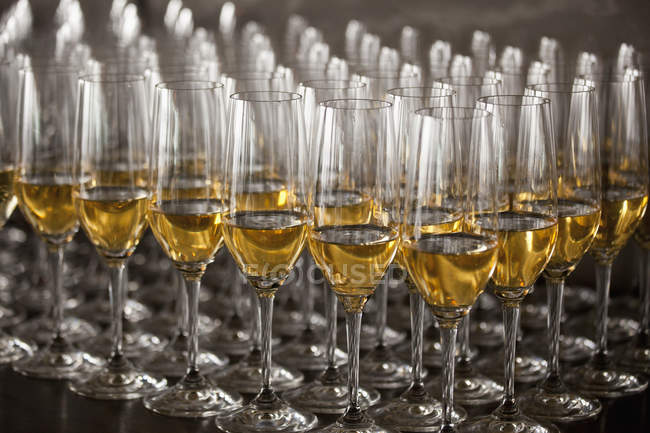 Glasses of white wine arranged on table — Stock Photo