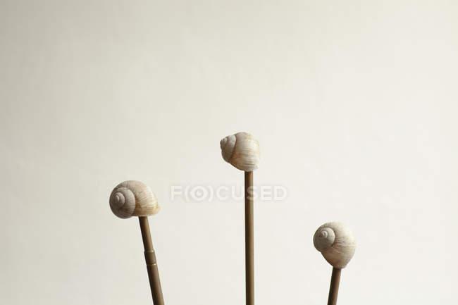 Ракушки на палочках на белом фоне — стоковое фото