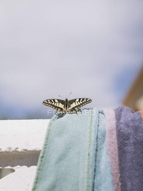 Close-up of butterfly on towel during sunny day against sky — Stockfoto