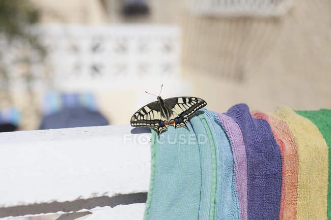 Nahaufnahme von Schmetterling auf Handtuch an sonnigen Tag — Stockfoto