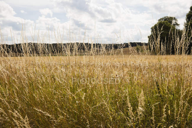 Plants growing on countryside field at summer day — Stock Photo