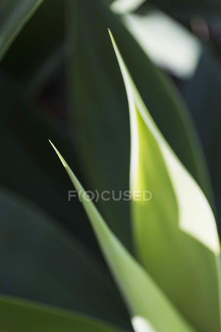 Close up view of plants leaves on sunny day — Stock Photo