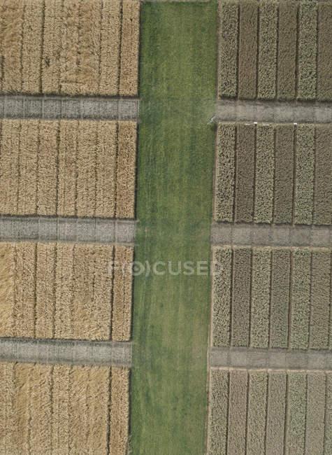 Повний антена кадрі подання в ландшафті сільськогосподарських культур — стокове фото