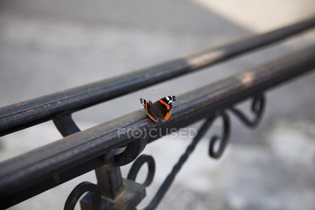 Крупным планом вид бабочки на металлические перила — стоковое фото