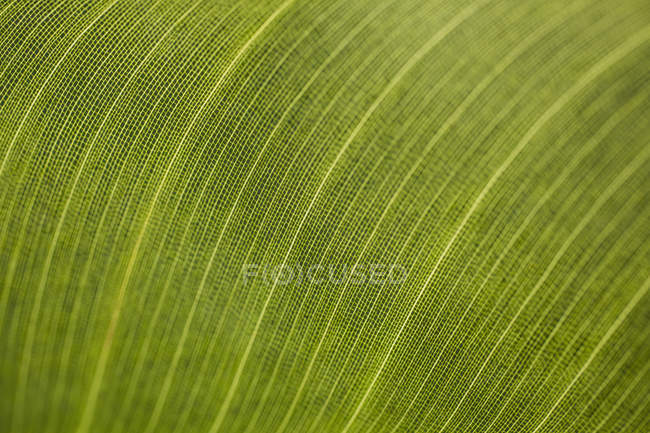 Macro shot of fresh green leaf — Stock Photo