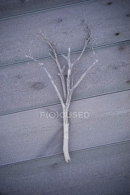 Vue de dessus de branche givrée sur plancher de bois franc — Photo de stock