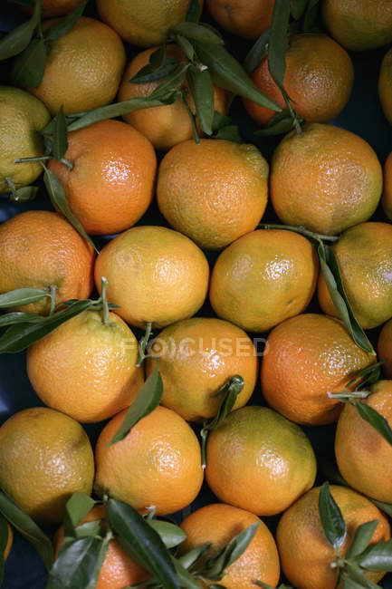 Top view of oranges with leaves — Stock Photo