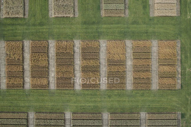 Aerial view of crops in agricultural fields — Stock Photo